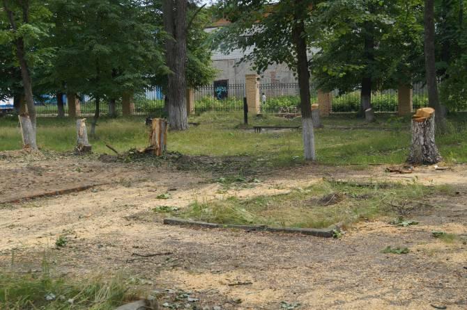 В Клинцах при благоустройстве сквера Воровского незаконно уничтожили 50 деревьев