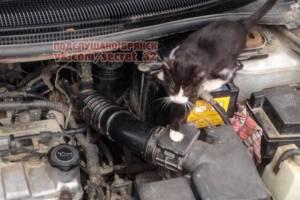 В Брянске неравнодушные люди спасли котенка