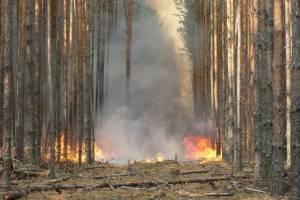 На Брянщине в этом году ущерб от лесных пожаров превысил 5 млн рублей