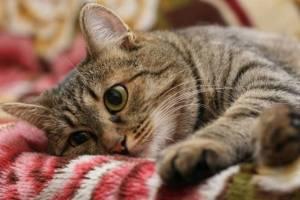 В Погаре сообщили о зверском убийстве домашних котов