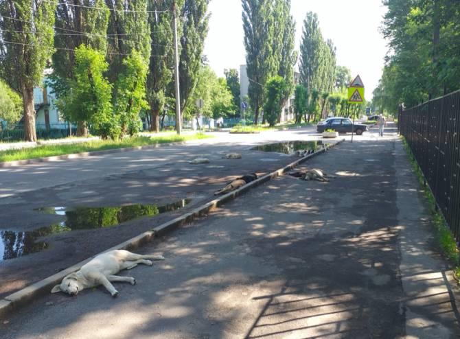 В Брянске подходы к детской поликлинике №2 оккупировала стая собак