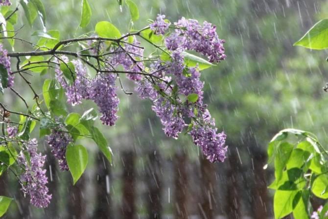 На Брянщине во вторник ожидается +18 и небольшой дождь