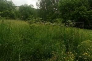 В Навле жители многоэтажки пожаловались на джунгли во дворе