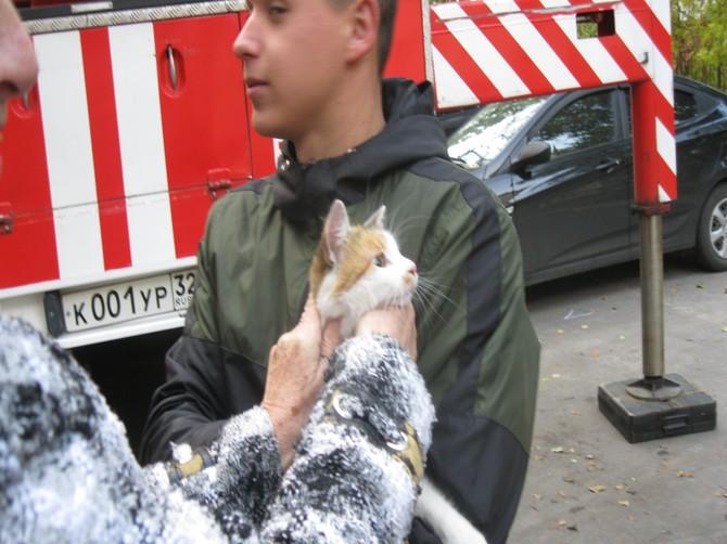 В Брянске спасатели сняли с дерева истощенную кошку
