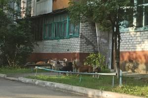 В Брянске псы взяли в заложники жителей многоэтажки