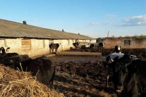 Дятьковских фермеров оштрафовали за нарушения при сборе отходов
