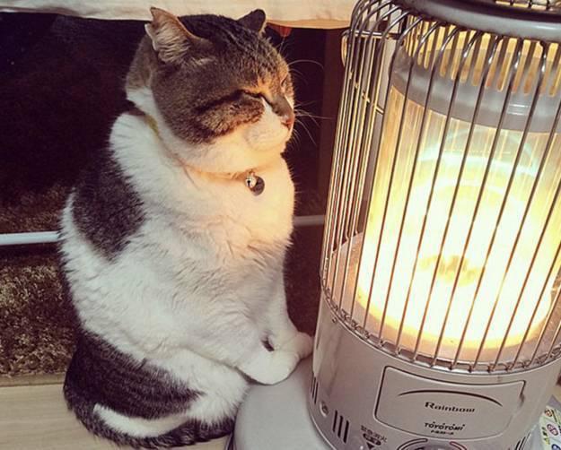«Брянсккоммунэнерго» наказали за холод в квартирах