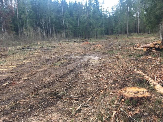 Под Брянском сделали жуткие кадры вырубки леса