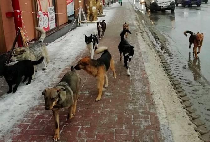 В Брянске зоозащитники оправдали нападения собак на людей