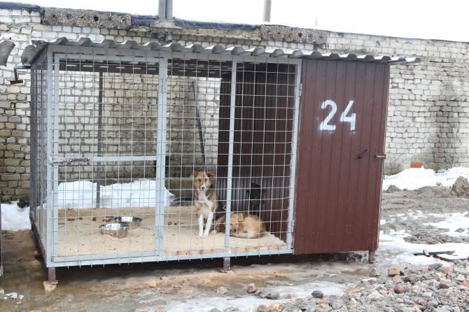В Брянске открылся приют для бродячих собак