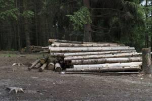 В Дятькове предпринимателя оштрафовали за отходы обработки древисины