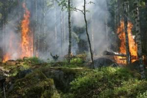 Сельцовские чиновники забыли о лесных пожарах