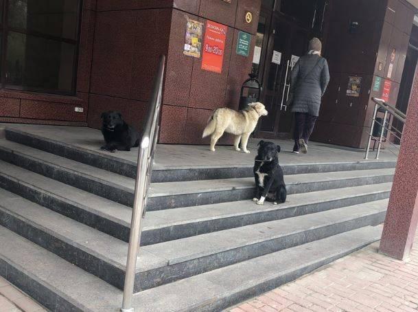 Собаки захватили вход в брянский ТЦ «Родина»