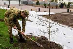 В Брянске возле «Дубравы» высадили 12 молодых дубов