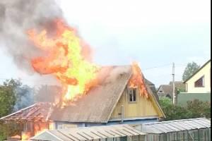 В Брянске сняли на видео сильный пожар в дачном сообществе