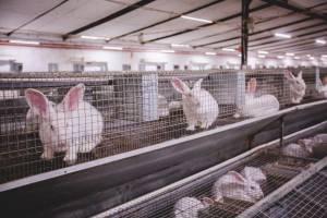В Брянской области вложат 1,9 млрд рублей в кролиководческие фермы