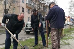 В Брянске на проспекте Московском высадили 76 саженцев рябины и липы