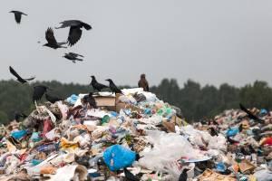 Брянские чиновники ответят за сброс канализации и свалки