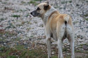 В Брянске на Ново-Советской собаки снова напали на людей