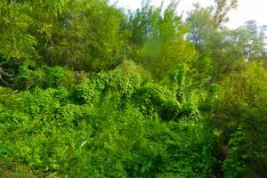 В Брянской области оштрафовали собственницу зарастающего участка