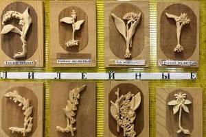 Брянцам показали уникальную коллекцию растений удивительного ученого