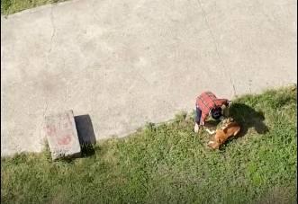 В Брянске сняли на видео агрессивную хозяйку пса