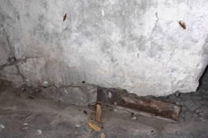 В Брянске подъезд многоэтажки захватили полчища мух и тараканов
