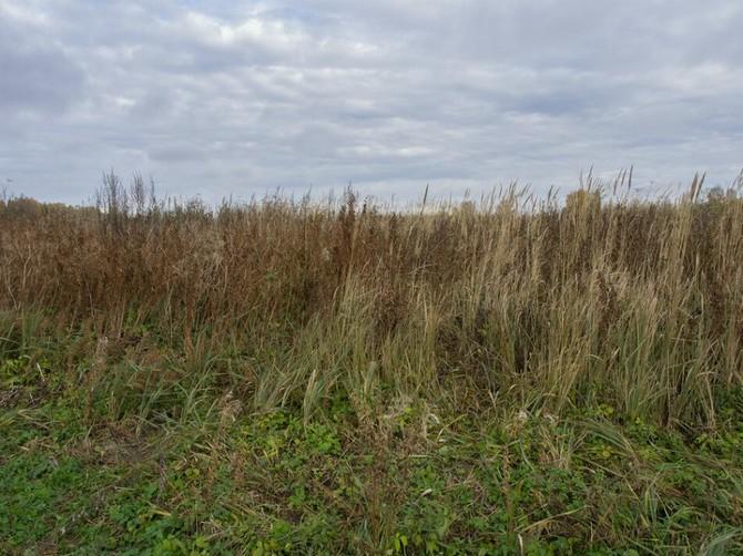 В Почепском районе бурьяном заросло 4,8 га земли