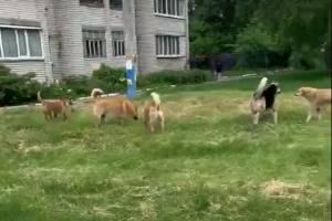 В Брянске стая бродячих собак «захватила» школу №41