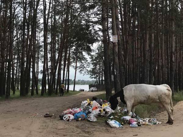 Брянцы устроили свалку возле озера Орлик