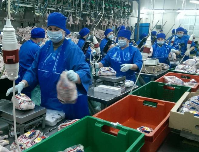 Брянскую птицефабрику «Победа-Агро» признали банкротом