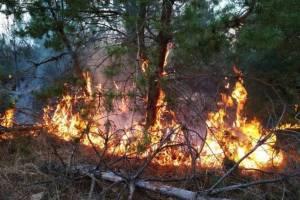Гордеевские чиновники забыли о пожарной безопасности