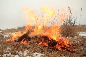 Возле брянских лесов за сутки дважды тушили горящую траву