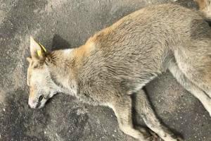 Брянцев шокировали массовые убийства собак возле «Макдоналдса»