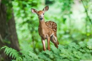 Дикие животные Брянщины пострадали при вырубках леса