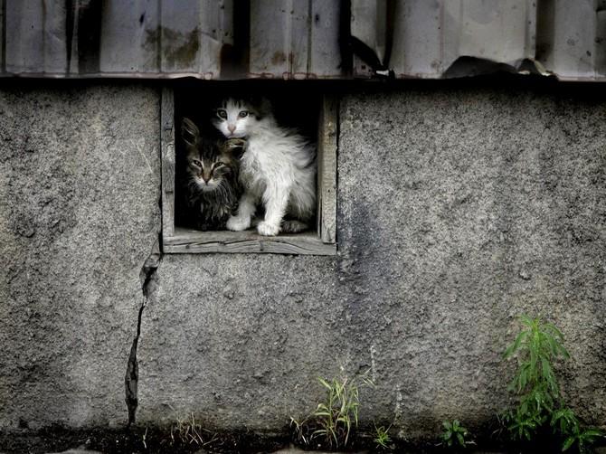 Подвалы брянских домов обязали держать открытыми для животных