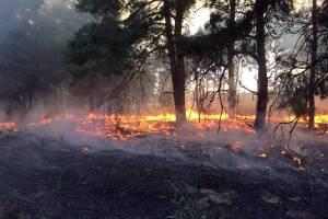 В Брянской области виновника лесных пожаров оштрафовали на 2,4 млн рублей