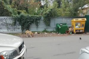 В Брянске истощенная беременная собака питалась картоном