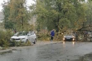В Бежицком районе Брянска на две легковушки рухнули деревья