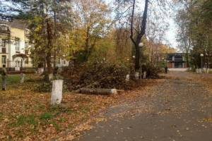 В сквере Камозина в Бежице началась вырубка деревьев