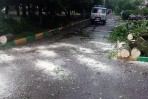 В Брянске за вечер из-за урагана рухнули 30 деревьев