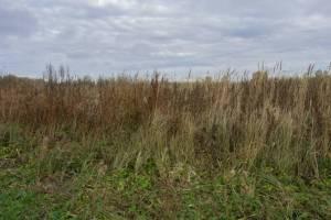 Брянца оштрафовали за заросшие бурьяном земли в Брасовском районе