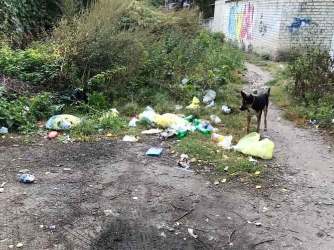 В Брянске сфотографировали мусорную свалку за площадью Партизан