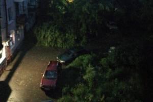 В центре Брянска дерево рухнуло на автомобили