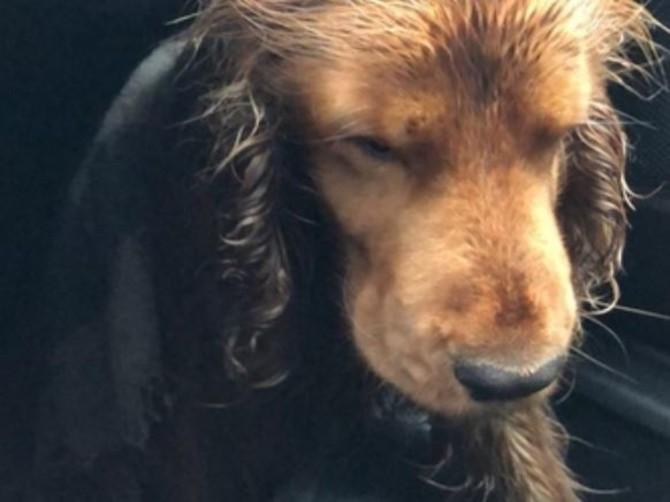 В Брянске ищут хозяев сбитой машиной собаки