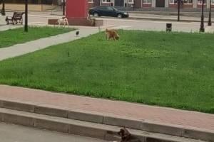 Центр Климово захватили бродячие собаки