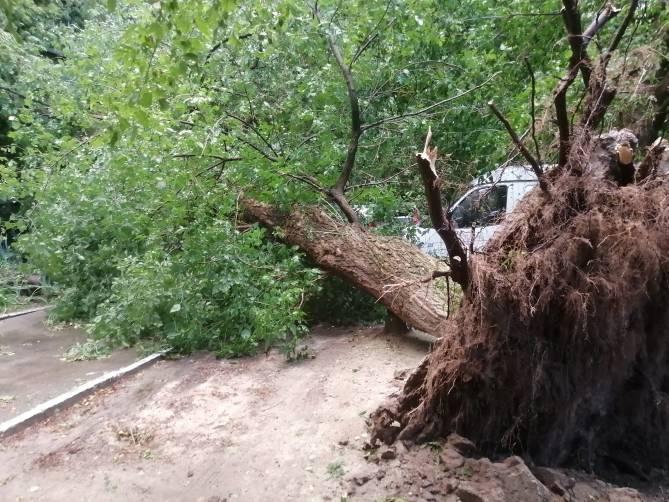 В Брянске у площади Партизан урага с корнем выдернул дерево
