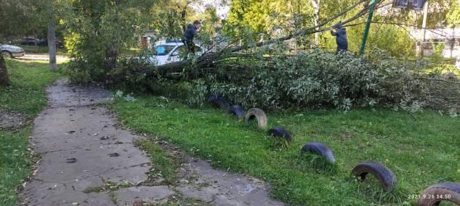 В Дятькове огромное дерево рухнуло в 12-м микрорайоне