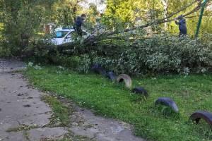 Жители Дятьково попросили власти убрать рухнувшее дерево в 12-м микрорайоне