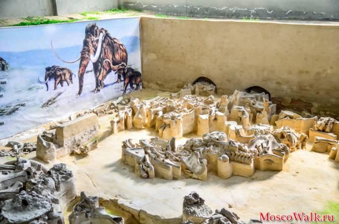 На реконструкцию брянского музея «Палеолит» выделят 64 млн рублей